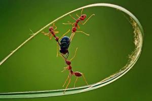 kisah-semut-dan-lalat