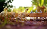 chickens-star-wars-toys-bokeh-hd-wallpaper