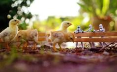 chickens-star-wars-toys-bokeh-hd-wallpaper
