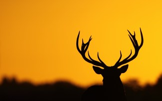 deer-silhouette-hd-wallpaper