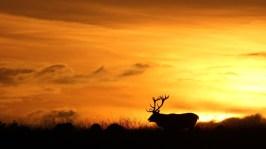 deer-sunset-hd-wallpaper