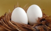 eggs-feathers-easter-hd-wallpaper