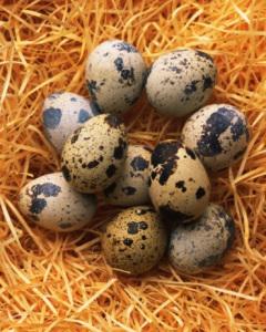 Quail Egg, Close Up