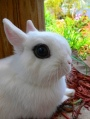 244b7-burton-jane-blue-dutch-rabbit-and-four-3-week-babies-and-black-and-white-kitten