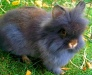 dd277-burton-jane-blue-dutch-rabbit-and-four-3-week-babies-and-black-and-white-kitten