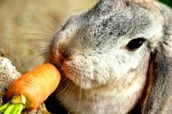rabbit_food