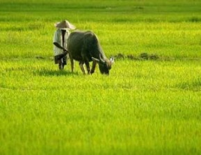 sawah-green-clean