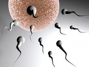 sperm-300x225