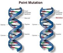 mutasi-titik-400x338