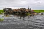 Ketika-Kerbau-Rawa-Danau-Panggang-dilepas-dari-kandangnya (1)