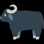 11532-water-buffalo