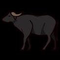 12443-water-buffalo