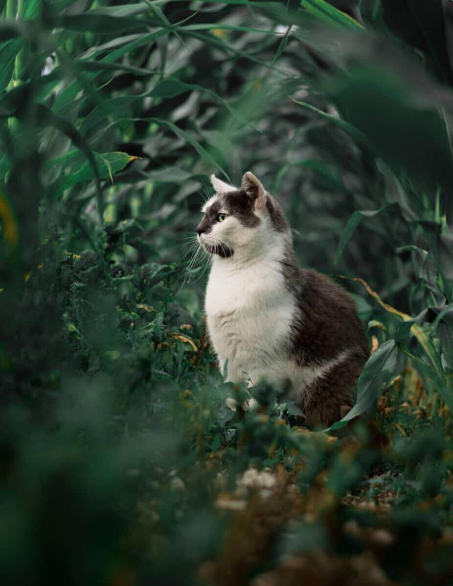Nama Kucing Terbaik Dalam Islam 81021 Nama Untuk Kucing Comel Lucu Dan Unik