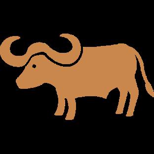 8703-water-buffalo