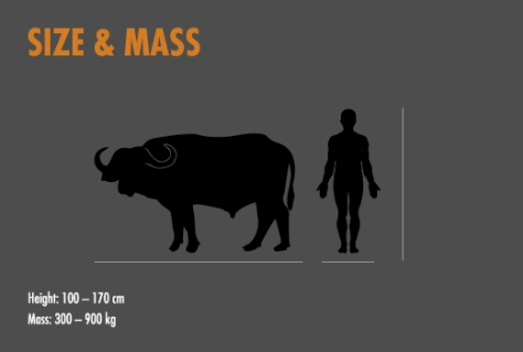cape-buffalo-tile