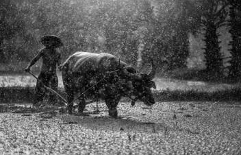 buffalo-1822579