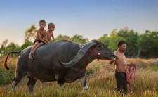 Thailand-Kinder-auf-Büffel1-wpcf_650x400